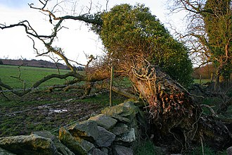 Leicestershire and Rutland Wildlife Trust - Image: Fallen tree at Charley Woods geograph.org.uk 350255