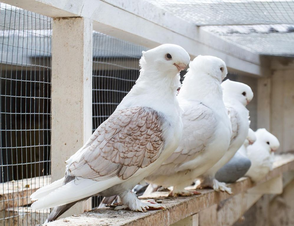 Best Dove Free House Paint