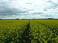 Farmer's Track through Crop Field - geograph.org.uk - 1324996.jpg