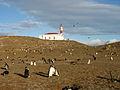 Faro Magdalena y pingüinos de Magallanes.jpg