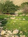 Fatzael Springs and water system 053.JPG