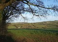 Field near Netherton - geograph.org.uk - 745255.jpg