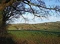 Field near Netherton - geograph.org.uk - 745255.jpg