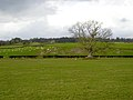 Fields at Duncow - geograph.org.uk - 354724.jpg