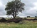 Firse sten (Raä-nr Falköpings Östra 1-1) utgrävning-08 1369.jpg