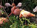 Flamingos Zoo Leipzig.jpg