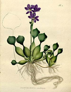 Flickr - BioDivLibrary - n4 w1150.jpg