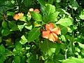 Flores Naranjas.JPG