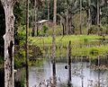 Floresta Amazônica - Iranduba.jpeg