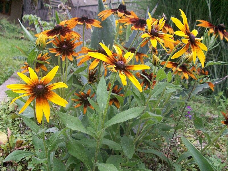 File:Flower02.jpg
