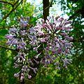 Flower (2492250327).jpg