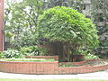 Flower garden at NDC-1.JPG