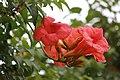 Flowers in bloom red.jpg