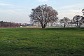 Flughafen tempelhof baum auf wiese 22.11.2011 14-49-53.2011 14-49-53.JPG