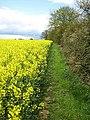 Footpath, Chignall St. James - geograph.org.uk - 784804.jpg