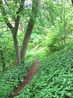 Footpath, Lineover Woods - geograph.org.uk - 181257