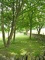 Footpath - Burton Acres Lane - geograph.org.uk - 1897992.jpg
