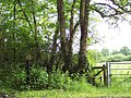 Footpath from Blackmoor Copse to Farley - geograph.org.uk - 447974.jpg