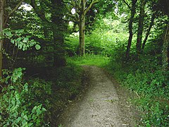 Footpath in Clapham Wood - geograph.org.uk - 870296.jpg