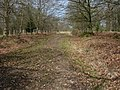 Footpath through Radnor Inclosure - geograph.org.uk - 779462.jpg
