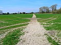Footpath to Snargate - geograph.org.uk - 394256.jpg