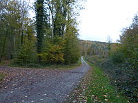 Image illustrative de l'article Forêt de La Londe-Rouvray