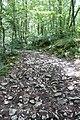 Forest @ Roc de Chère @ Talloires (34836770623).jpg