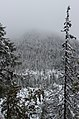 Forest near Hrebienok 2, Slovakia.jpg