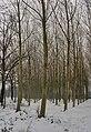 Foresta in neve - panoramio.jpg