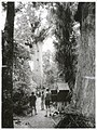 """Forestry -Trees Publicity Caption Large Kauri Tree """"Tane Mahuta"""" in the Waipoua Forest. Northland Photographer G Riethmaier.jpg"""