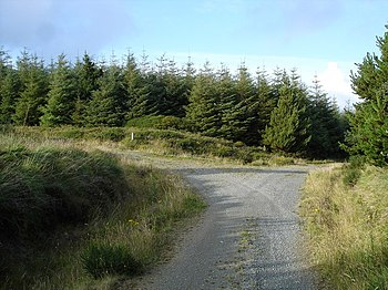 English: Forestry track junction. I had every intention of going to the trig point marked on the summit of Mullaghanuish, but when I saw the density of tree ahead I decided that this ranked very low on fun ways of spending time.