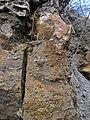 Fossiliferous dolostone (Rockford Limestone, Lower Mississippian; Burkesville West Rt. 90 roadcut, Kentucky, USA) 1 (45708301275).jpg