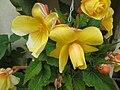 Fotky květů (05).jpg