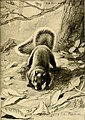 Four-footed Americans and their kin (1898) (14595018168).jpg