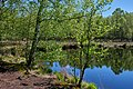 Frühling am Teich im Kaltenhofer Moor 9946.jpg