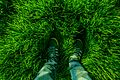 From where you stand green grass feet svln4821.jpg