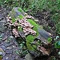 Fungi (2581151937).jpg