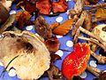 Fungi (8794829878).jpg