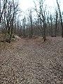 Gödöllő Hills PLA, forest, green cross hiking trail, 2019 Isaszeg.jpg