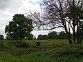 GOC The Pelhams 073 Patmore Heath Nature Reserve, Albury (28181933841).jpg