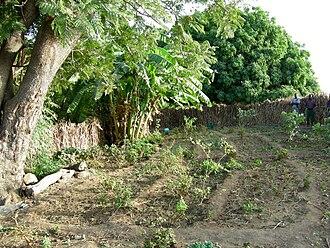 Dourtenga Department - A garden in Dourtenga