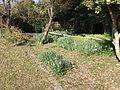 Garden of Former Residence of Nabeshima Family in Kojirokuji Area 13.jpg