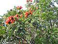 Gardenology.org-IMG 1375 rbgs10dec.jpg