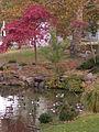 Geese, Allegheny Cemetery, 2015-10-22, 01.jpg