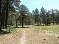 General Crook Trail, Payson, AZ 85541, USA - panoramio (10).jpg