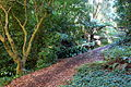 General view - San Francisco Botanical Garden - DSC09807.JPG