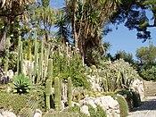 Giardini Botanici Hanbury - cacti