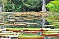 Giardino Botanico - panoramio.jpg