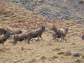 Glencoe deer.JPG