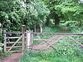 Glory Wood - geograph.org.uk - 172935.jpg